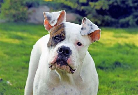 itchy ears shaking home remedy remedies for itchy ears itchy dogs and remedies