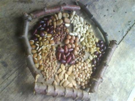 imagenes de semillas varias varias semillas ref 19550