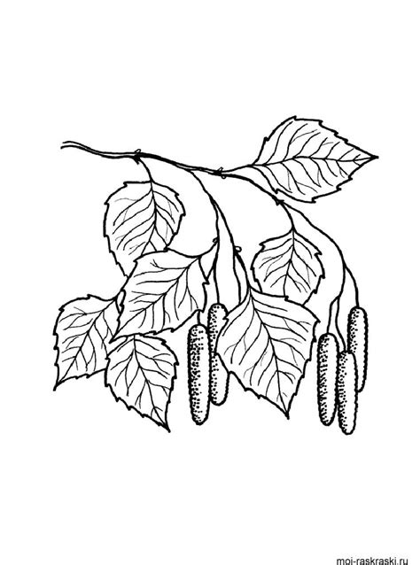 birch leaf coloring page birch tree leaves outline sketch coloring page