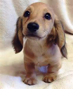 10 Most Loyal Dog Breeds