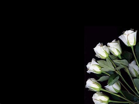 imagenes blancas en fondo negro rosas blancas wallpaper fondo negro rosa pinterest
