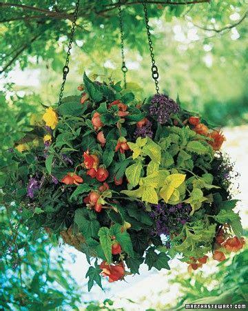 trailing hanging basket foliage plants 17 best images about gardening hanging baskets on