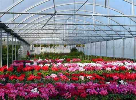 serre fiori a pistoia il centro regionale per la prevenzione e la