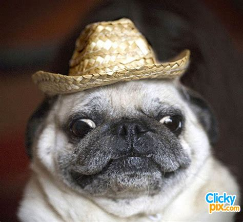 puppies with hats dogs wearing hats 34 pictures clicky pix