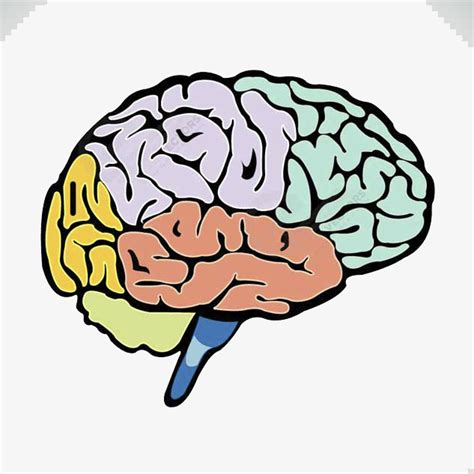 colored lines for the brain colored brain brain clipart color colour png image and