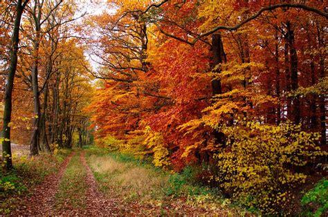 imagenes paisajes naturales gratis 14 fotos de paisajes naturales bosques monta 241 as y lagos