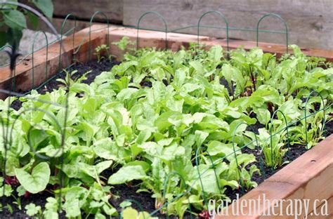 Converting Lawn Into Raised Garden Beds Without Waste Turn Lawn Into Vegetable Garden