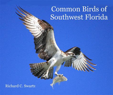 common birds of southwest florida by richard c swartz