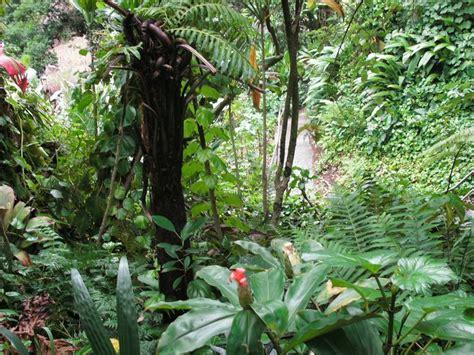 Botanical Gardens Oahu Hawaii Wahiawa Botanical Garden In Oahu Hawaii Times