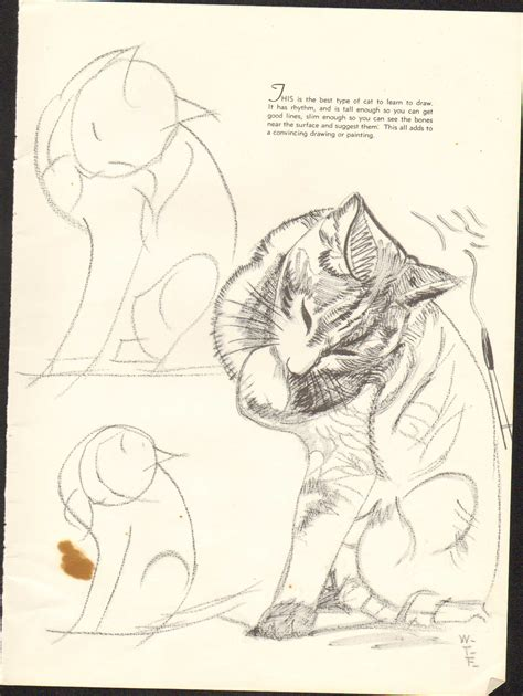 doodle drawing exercises how to draw cats img 23 jpg