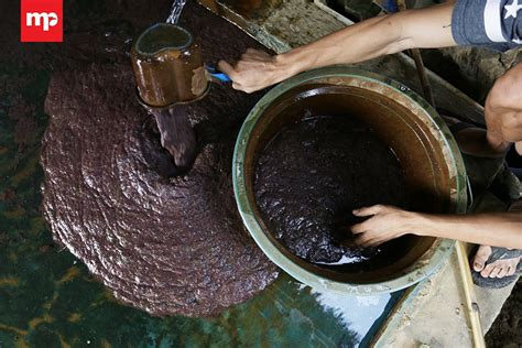 Cacing Tangerang budidaya cacing sutera tangerang merahputih