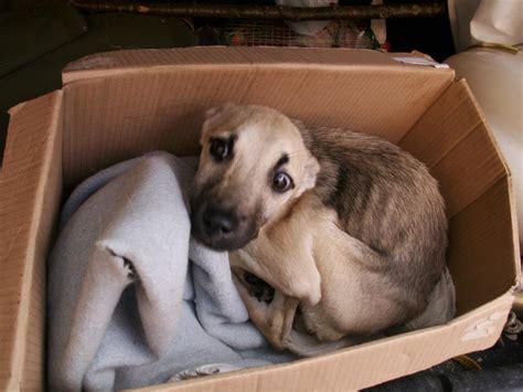 distemper in puppies distemper in memory of vučko