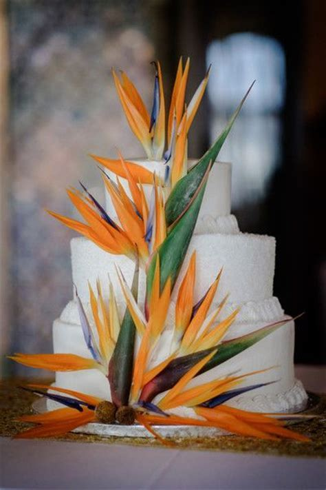 17 Best images about Tropical Cakes on Pinterest   Hawaii