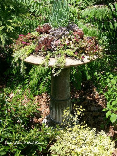 how to make a succulent container garden a succulent garden in an birdbath hometalk