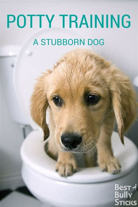 potty a stubborn puppy the world s catalog of ideas