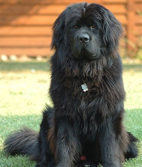 quietest breeds 15 quietest breeds dogs tips advice me