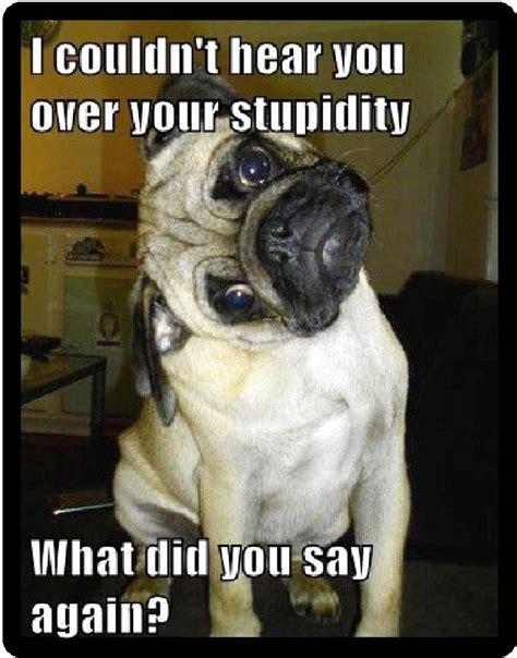 are pugs stupid humor pug stupidity refrigerator magnet ebay