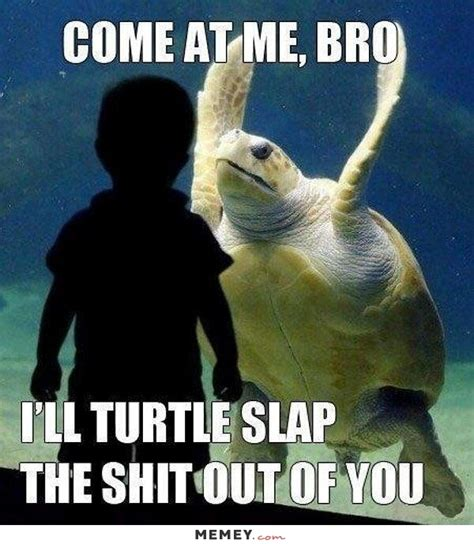 Funny Angry Memes - turtle memes funny turtle pictures memey com