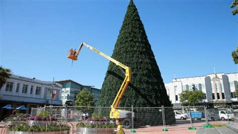 tallest xmas teee in tge workf hamilton has the tree in new zealand stuff co nz