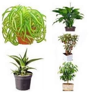 typical house plants house plant types categories of indoor plants