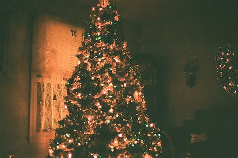 vintage tree pictures vintage tree pictures photos and images for