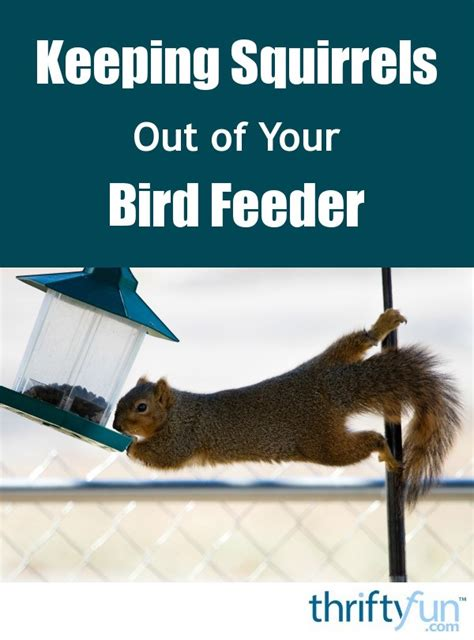 How To Keep Squirrels Out Of Bird Feeder keeping squirrels out of your bird feeder thriftyfun