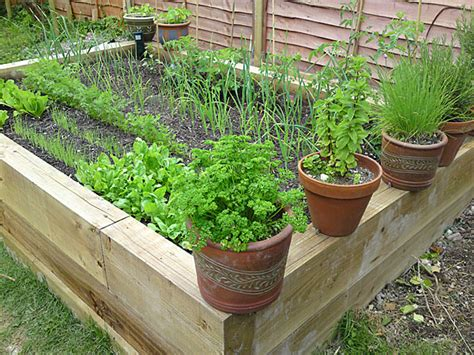 vegetable bed raised vegetable bed