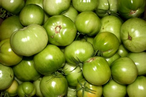 green tomatoes picture free photograph photos public domain