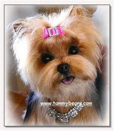 how to make bows for yorkies yorkie show bows how to make breeds picture