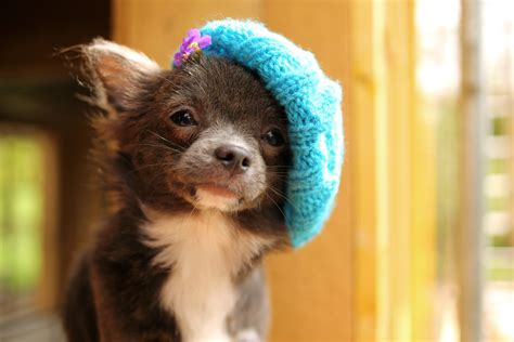 puppies in hats puppies in hats the hat