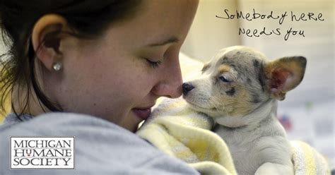 humane society for dogs animal shelters adopt a pet michigan humane society