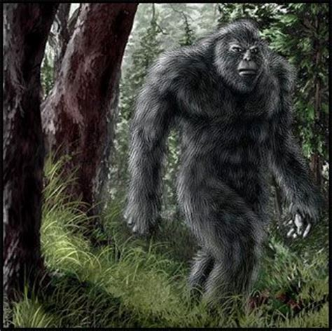 Big Foot Search 1973 Best Images About Bigfoot Bhm Creatures On Paranormal Bigfoot