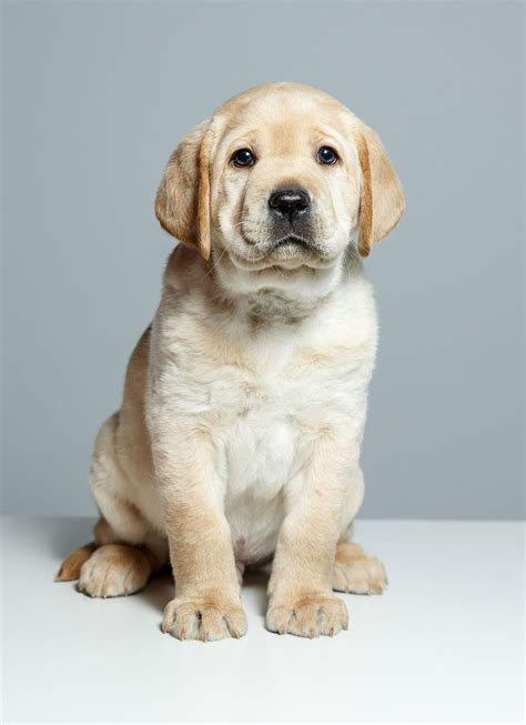 today show puppy   purpose peoplecom