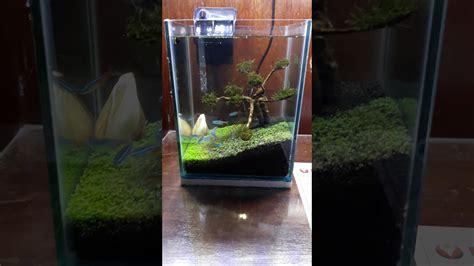 ukuran aquascape minimalis