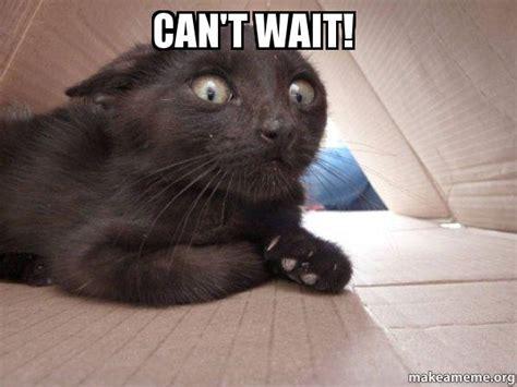 It Can Wait Meme - can t wait schitzo cat make a meme