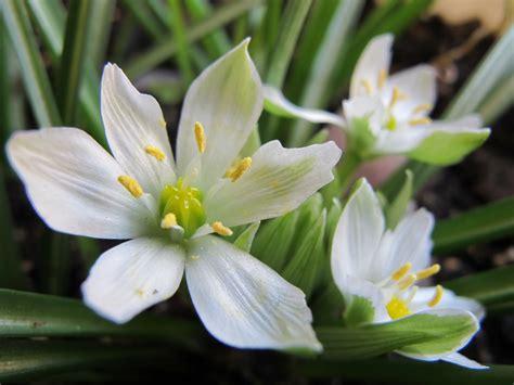 terapia fiori di bach sentir con flores de bach pilar vidal claver 237 a resistencias