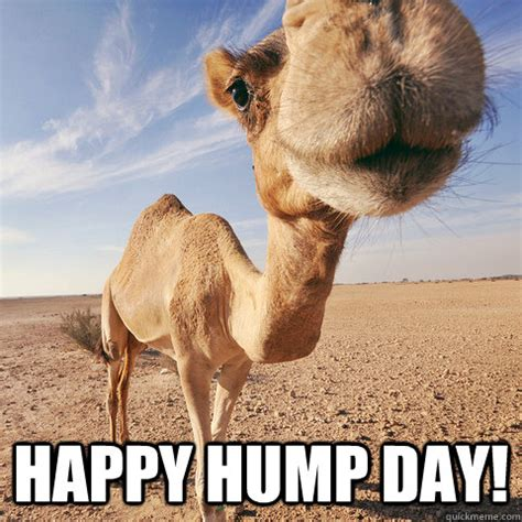 Happy Hump Day Memes - happy hump day pictures photos and images for facebook