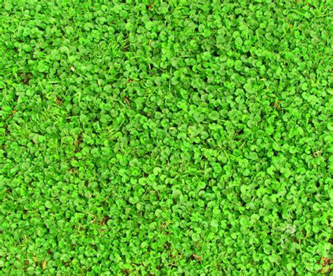 giardino senza erba erba giardino senza manutenzione