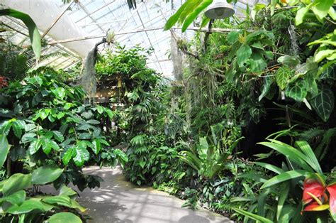 Sarasota Botanical Gardens Conservatory Selby Botanical Gardens Sarasota Fla