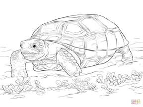 coloring pages snapping turtle images gallery