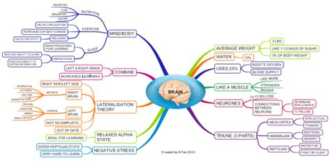 Website Planning Software facts about the human brain mind map biggerplate