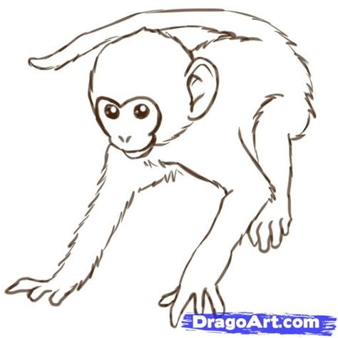 how to draw a monkey swinging on a vine draw monkeys step by step drawing sheets added by