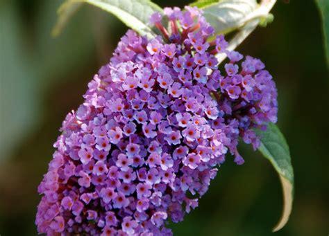orchidee fiori appassiti il mondo in un giardino un albero per le farfalle e non