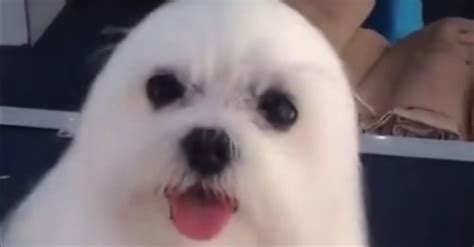 puppy seal puppy pretends to be a seal and melts hearts everywhere