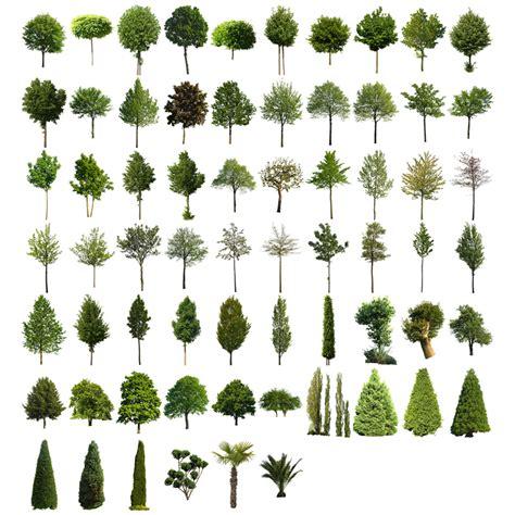 baum architektur cutout trees v02 architektur b 228 ume 187 tonytextures de