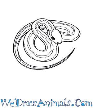 garter snake coloring page garter snake coloring download garter snake coloring