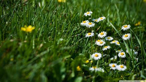 Wallpaper Grass Flower | download field of grass and flowers wallpaper 1920x1080