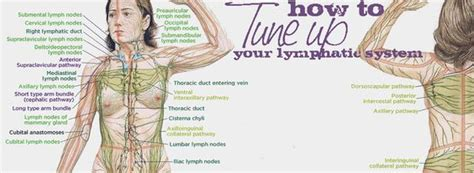 Lymph Detox Essential by Detox Essential Oils For And Essential Oils On
