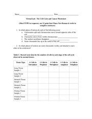 Cancer Worksheet by The Cell Cycle And Cancer Worksheet 1 Lab The
