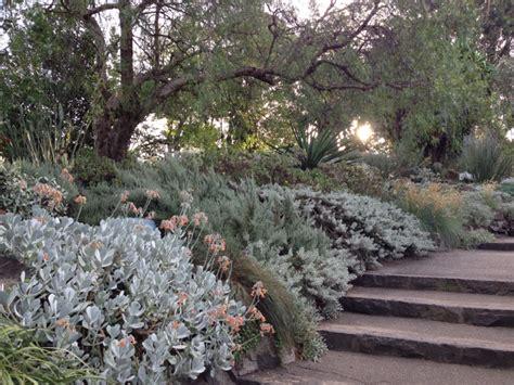 Pflanzen Garten Ohne Pflege by Silberlaubige Pflanzen Im Garten Oder Als Topfpflanze 8